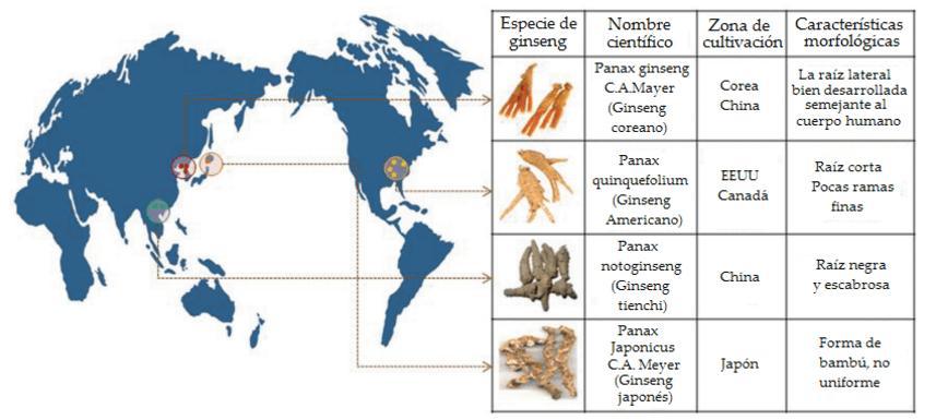 las especies de ginseng